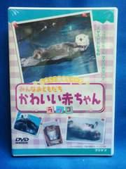 新品DVD みんな おともだち かわいい赤ちゃん(ラッコ)