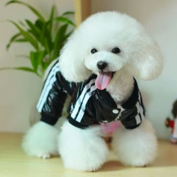 ★かわいいドッグロゴ入り外出用スーツハイクオリティブラック
