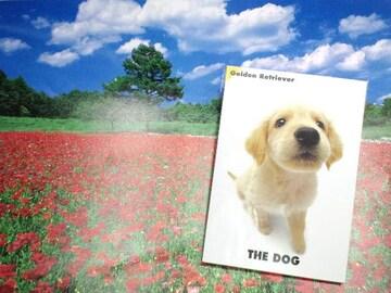 犬送180円kgTHEDOGPostCardGOLDENゴールデンレトリバーポストカード冊子Book