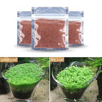 アクアリュム用品 水草シード 3つセット 水槽 ミニ種子