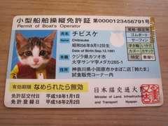 ◆なめ猫なめんなよ◆小型船舶操縦免許証◆チビスケなめねこ
