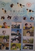 福士蒼汰(*^▽^*)旅猫リポート シール