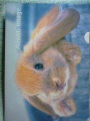未使用 クリアファイル うさぎ/ウサギ ロップイヤー ¥103