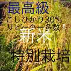 29年新米 こだわり栽培 愛媛県東温市こしひかり30�`玄米