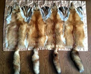 ■珍【狐皮4匹】着物箪笥の掛物/床の敷物/壁の飾り物 特注品■